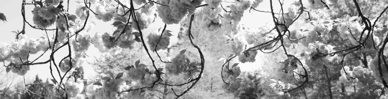 Blütensw-00450