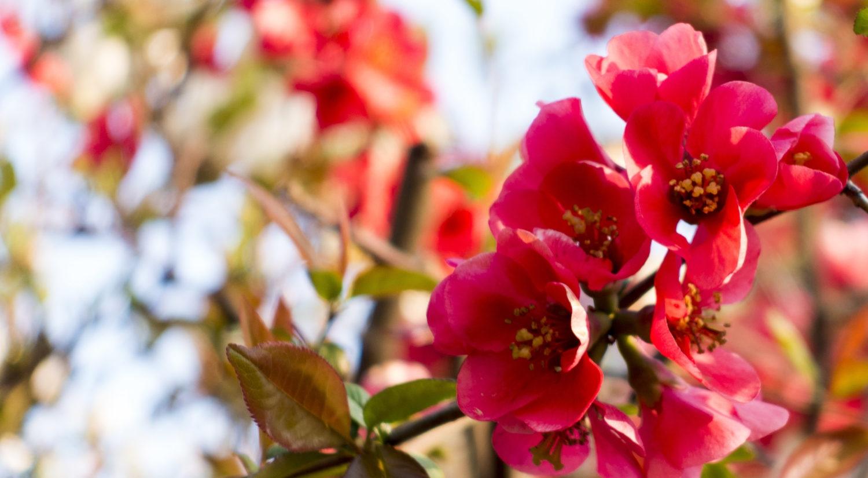BlumeFarbverstärkt-05217